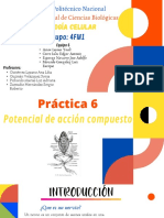 Equipo 6 - Seminario 6 fisiologia