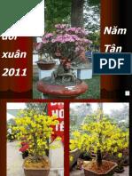 Cau Doi Xuan 2011 (Tnt)
