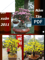 Cau Doi Xuan 2011 (Tnt)