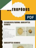 ARTROPÓDOS