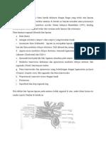 Anatomi Regio Inguinal