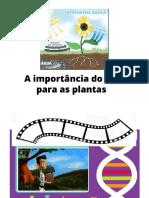 fotossintese SC