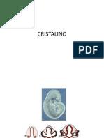 CRISTALINO embriologia pro
