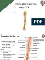 arterias y venas del miembro superior.pdf