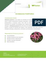 EQUINACEA-PURPUREA (1)