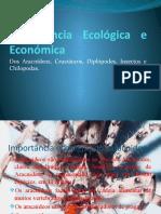Importância Ecológica e Económica do filo artrópode