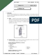 5to. Año - BIOLOGÍA - Guía 4 - La célula II.doc