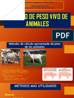 Cálculo de PESO VIVO Animal SAA-200 ngc Ok