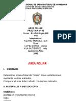 6 area folia