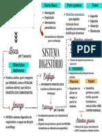 sistema disgestório