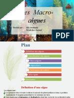 macro-algues-