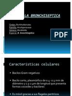 Bordetella_Bronchiseptica