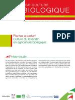 Fiche Technique Lavandin.pdf
