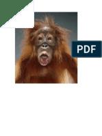Portraits of Primates
