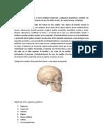 LA CABEZA.pdf