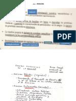 ENDOCRINO 5.pptx
