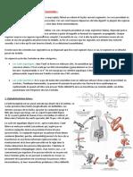 Cestodes Nematodes holox.pdf