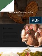 Gallinas ornamentales
