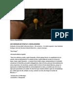 LOS HONGOS DE ITZATA 3 CONCLUSIONES PDF.pdf