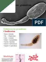 Echinococcus  granulosis