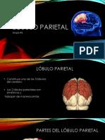 Lóbulo parietal presentacion