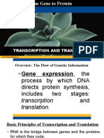 Transciption and Translation