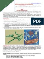 Infecciones Bacterianas de La Piel y Tej