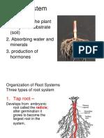 Botany-5-Root-System.pdf