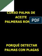 4 - PLagas de la palma