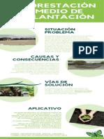 Verde Ilustración Mariposa Cronología Infografía