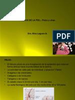 ANEXOS DE LA PIEL.ppt