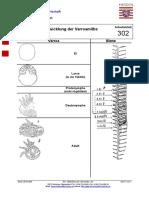 302 - Entwicklung der Varroamilbe 2005-05-30