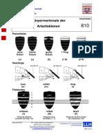 810 - Koerpermerkmale der Arbeitsbienen 2010-09-29.pdf