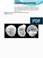 GLOBIGERINA BINAIENSIS.pdf