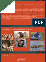 EVOLUCIÓN DEL VIRUS DE LA ENCEFALOMIELITIS AVIAR DURANTE