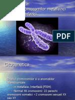 analiza cromozomilor