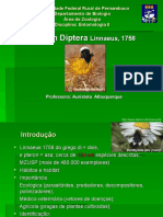 Apresentação Diptera_completo