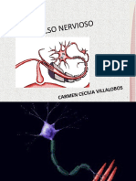 016 B    impulso nervioso