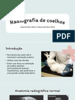 Radiografia de coelhos