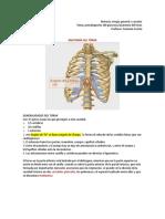 Anatomia Del Torax , Traqueostomia