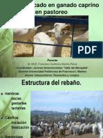 cabras tlaxcala 2017