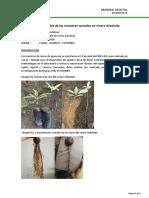 Resultados vivero Arboleda Abril 2018.pdf
