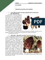 Produse Accesorii Ale Padurii - Principalele Specii de Ciuperci