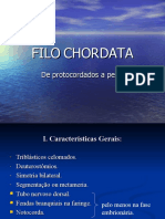 45_chordatai