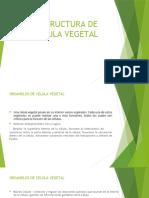 ESTRUCTURA DE CELULA VEGETAL