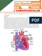 Aparato-Cardiovascular-para-Cuarto-Grado-de-Secundaria