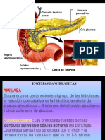 ENZIMAS PANCREAS