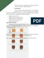Extracción y caracterización de aceite de nuez arreglar