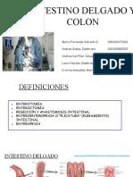 INTESTINO DELGADO Y COLON.pptx