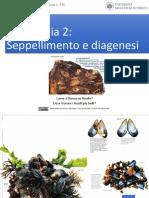 Andrea Baucon, Corso Di Paleontologia - Lezione 3 - Tafonomia 2 (Seppellimento e Diagenesi)